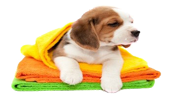 Welcome to prowash car dogwash dog wash solutioingenieria Gallery